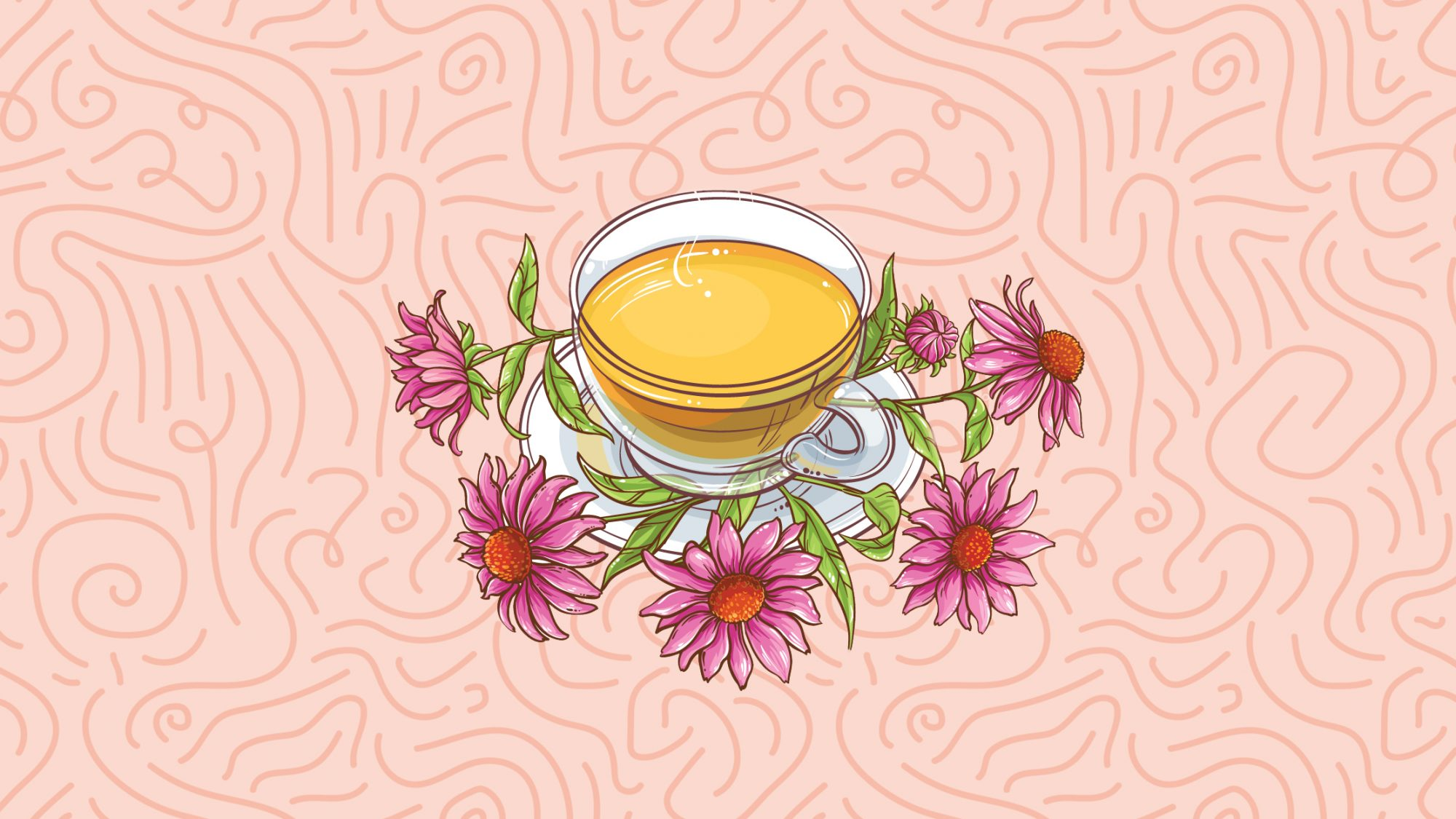 What Is Echinacea—and Can It Really Help a Cold?