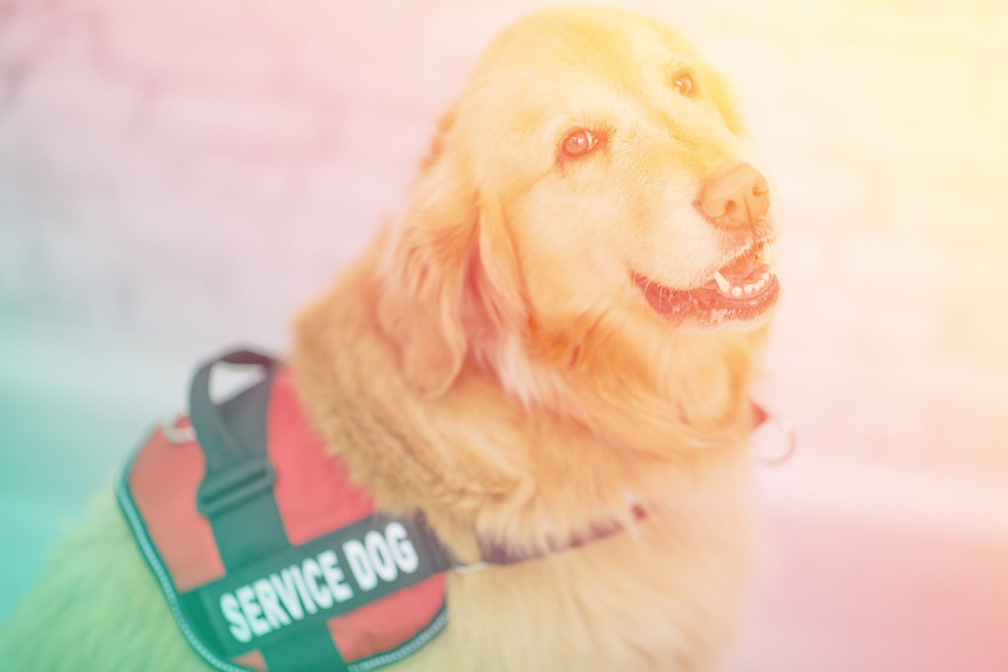 What's the Difference Between an Emotional Support Animal and a Service Dog?