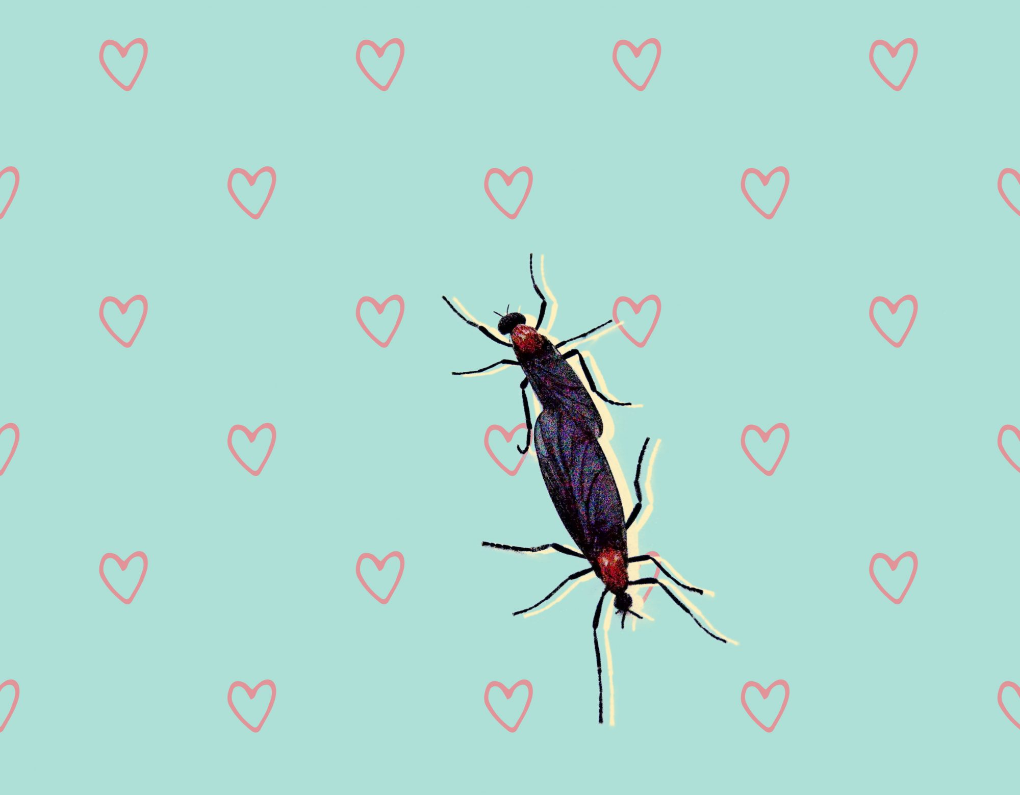Lovebug Insect Season is Upon Us—Here's What You Need to Know