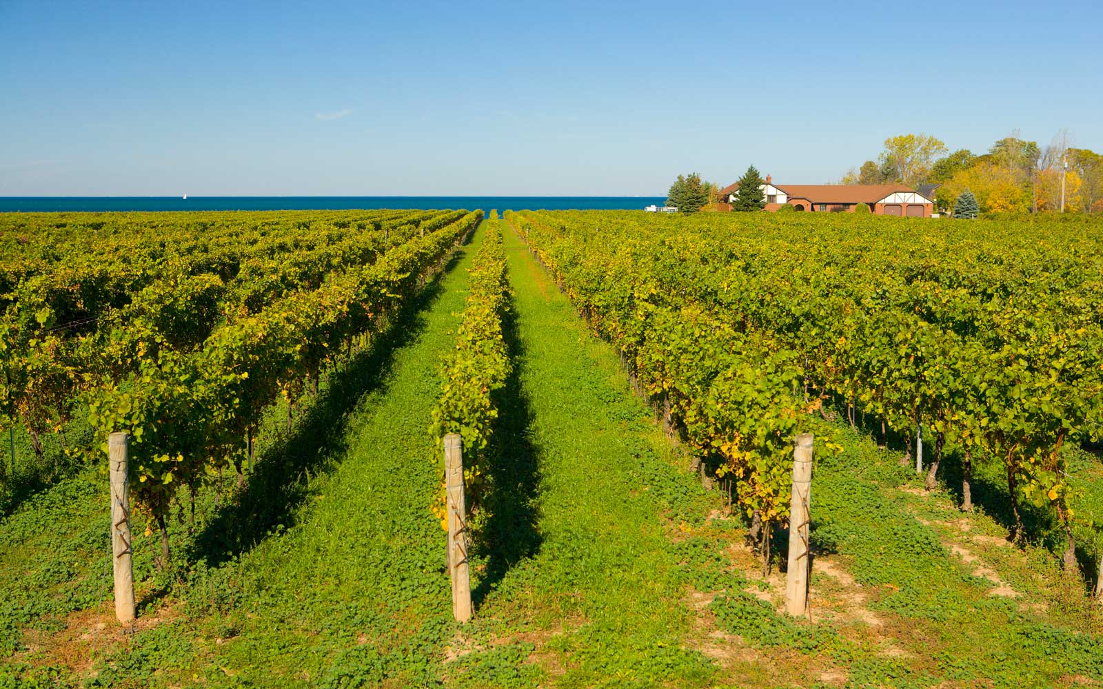 Winery Vineyard, Niagara-on-the-Lake, Ontario