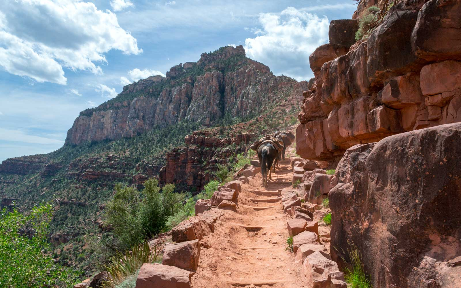 Ride a donkey in the Grand Canyon