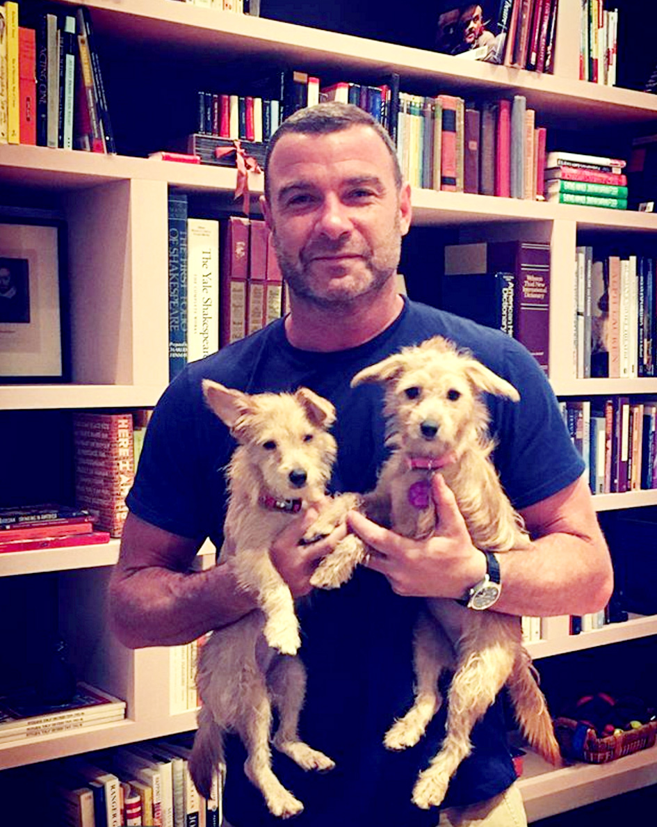 Watch Liev Schreiber Immediately Adopt Dogs Displaced by Hurricane Harvey