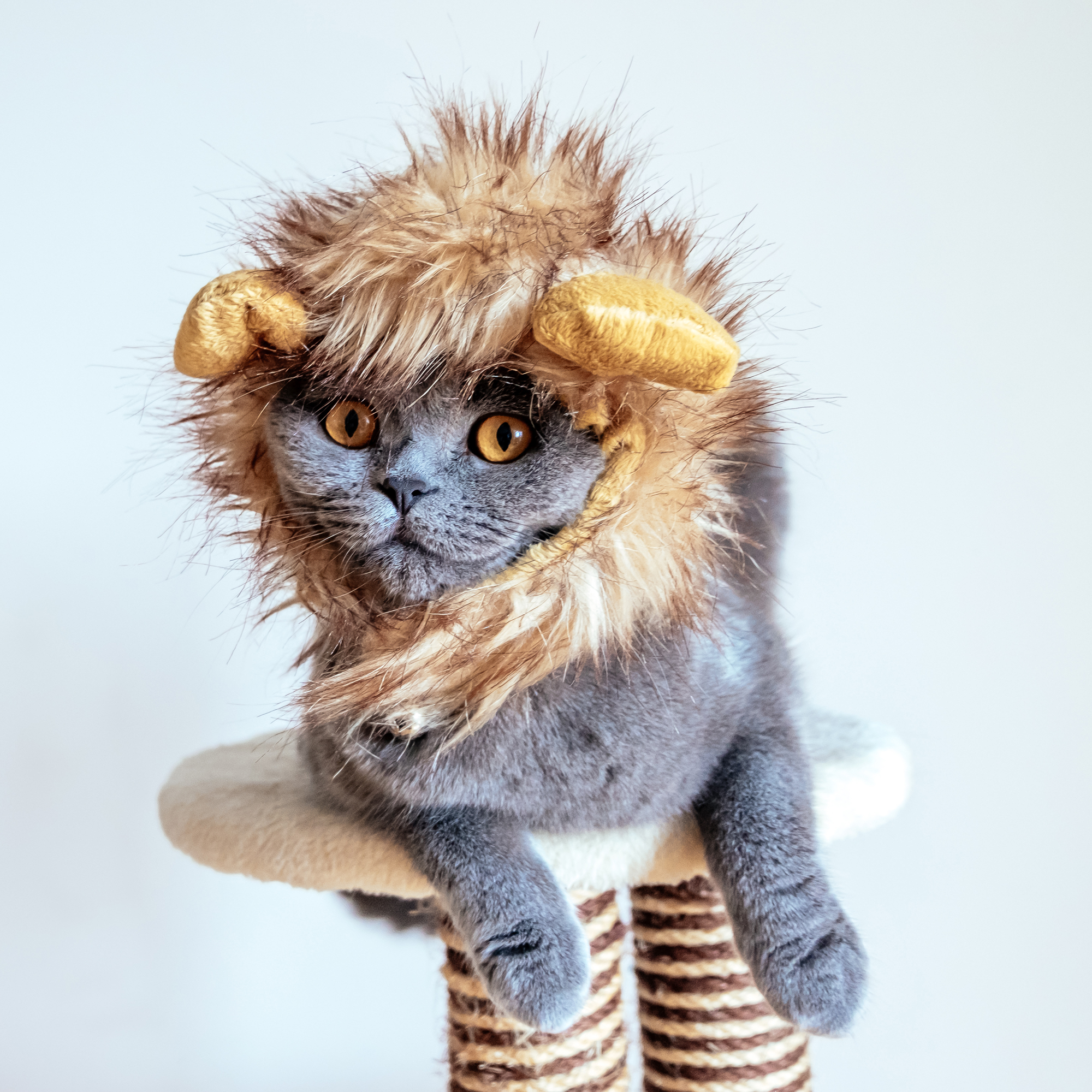 10 Hilarious Halloween Costumes for Your Cat