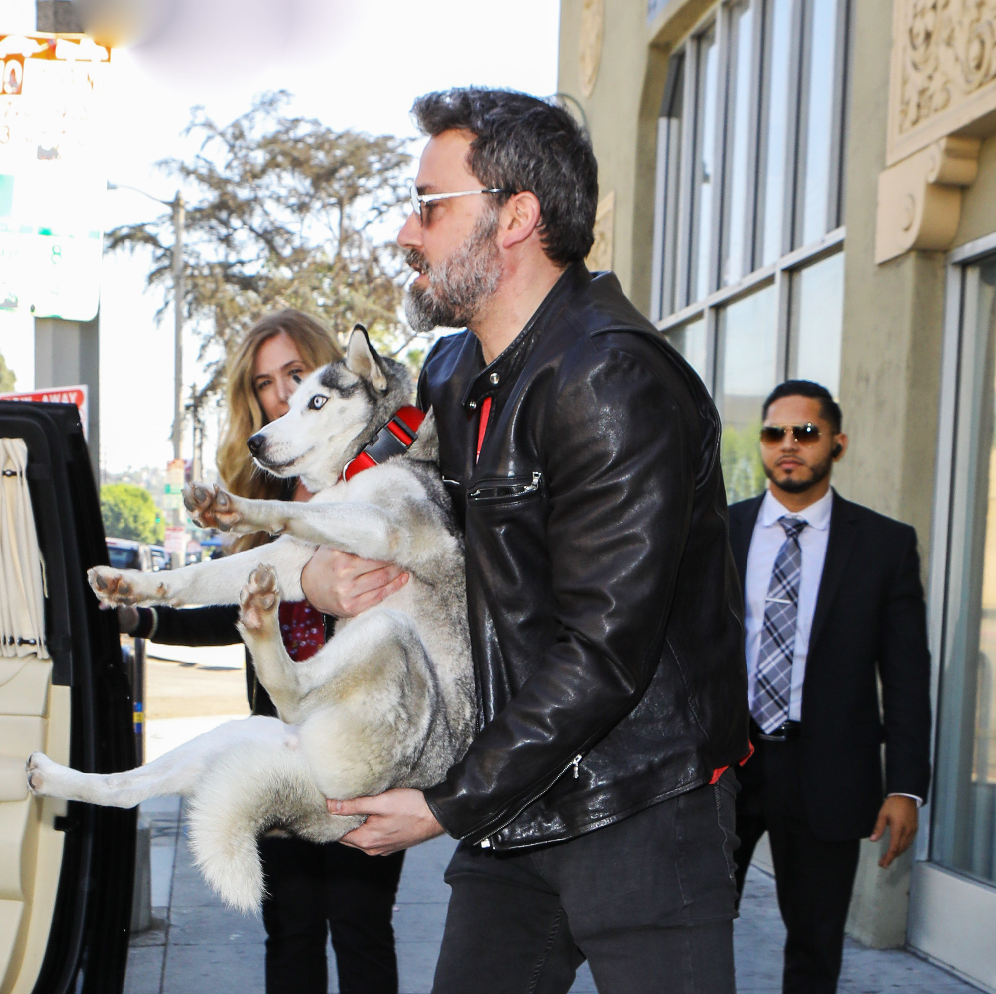 Ben Affleck Totes Around His Newly Adopted Husky