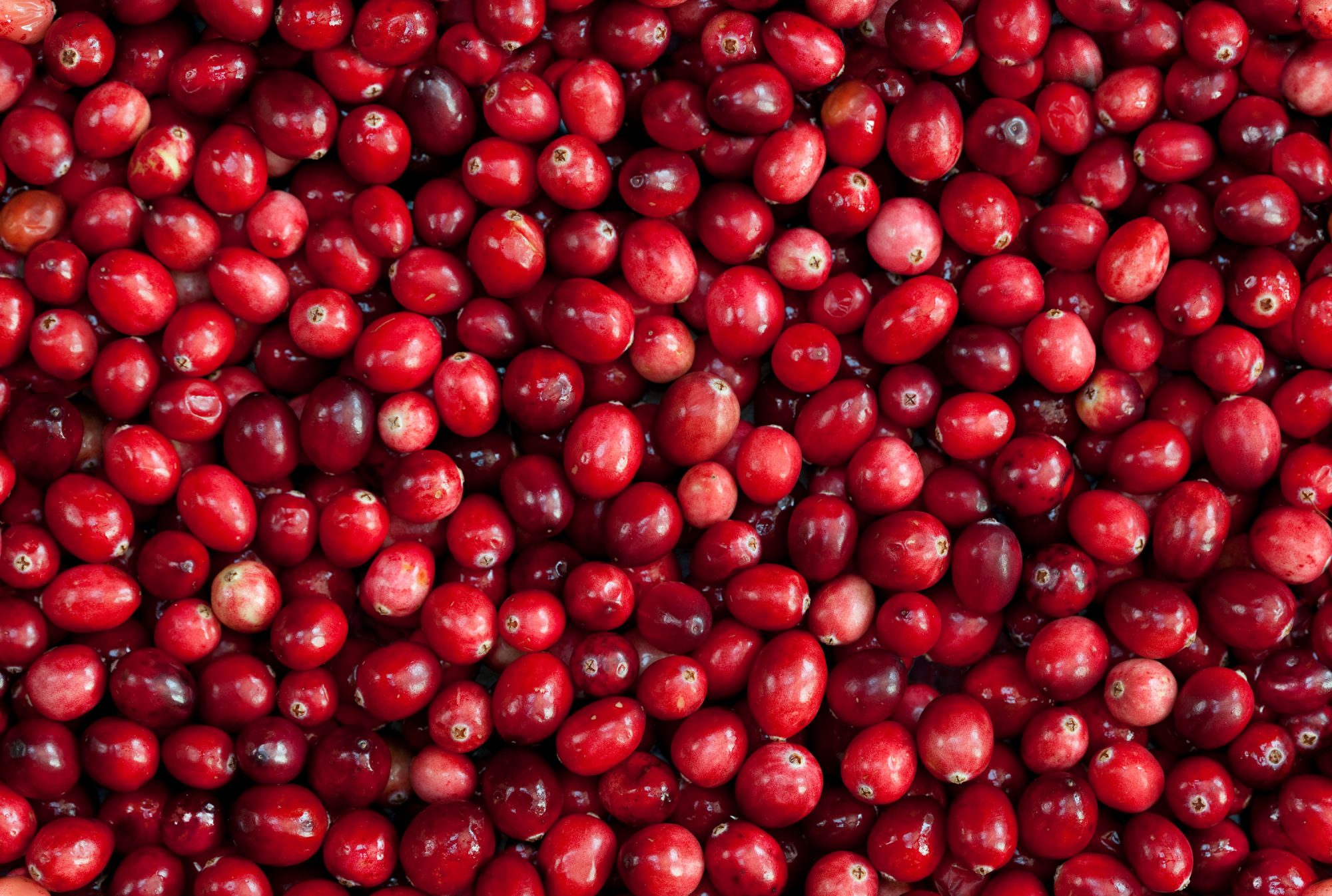 Do Cranberries REALLY Help with Urinary Tract Infections? An OB-GYN Sets the Record Straight