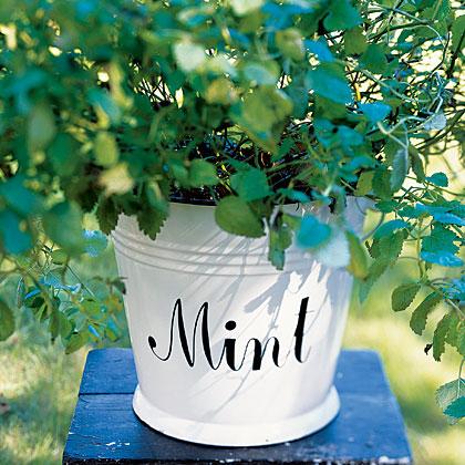 7 Ways With Mint