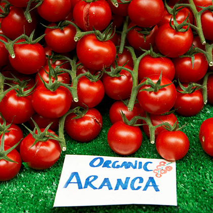 Buying Organic for Beginners