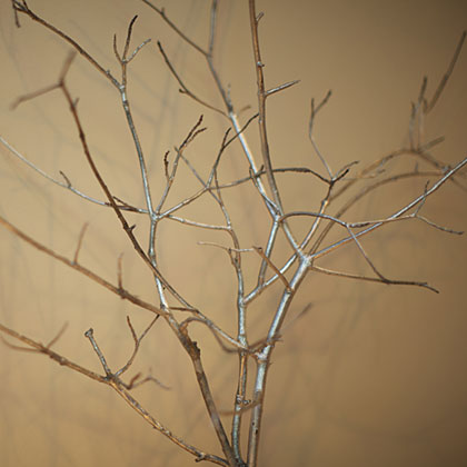 If you want something really bold, cut a few branches from your bare trees and spray paint them white or silver. Once dry, cover with tiny white lights and hang them or arrange them on your table.