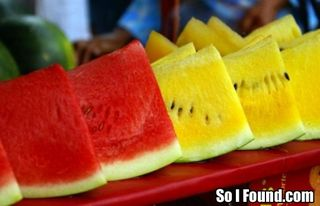 My Love to the Yellow Watermelon