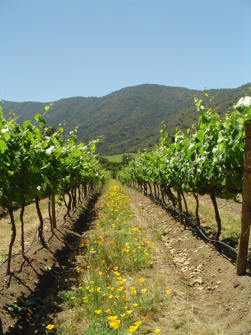 Earth-Friendly Wine from Chile