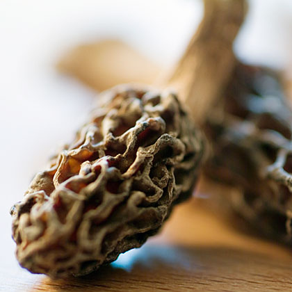 Morels RecipeBecause they are one of the last truly foraged, wild foods, morels are pricy. But the nutty, earthy aromas and flavors offered by this affordable luxury make the prep worth it. While you may have heard not to use water when cleaning mushrooms, it's actually okay to soak morels briefly in cold water to remove the grit trapped in the honeycomb caps. Swish or brush out the dirt, drain and allow them to dry thoroughly before cooking. Pair with other spring veggies like asparagus, spring onions, and green peas or toss in pastas, sautés, or scrambled eggs. Add to a buttery sauté of shallots with garlic and finish with a spritz of lemon juice.