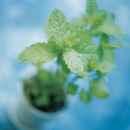 Superfood: Mint