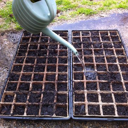 watering-seed-trays.jpg