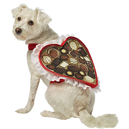 Box of Chocolates Dog Costume