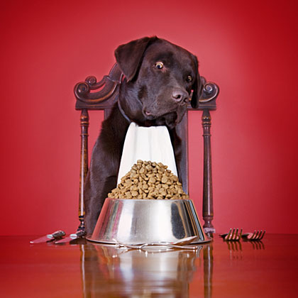 Tips for Buying Healthy Dog Food