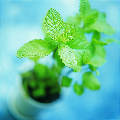 Tips for Buying Mint