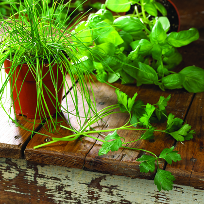 10 Herbs Every Cook Should Use