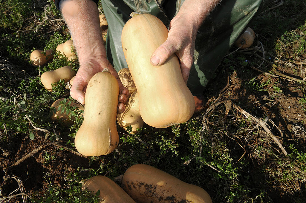 Butternut Squash / Photo Credit: Getty Images