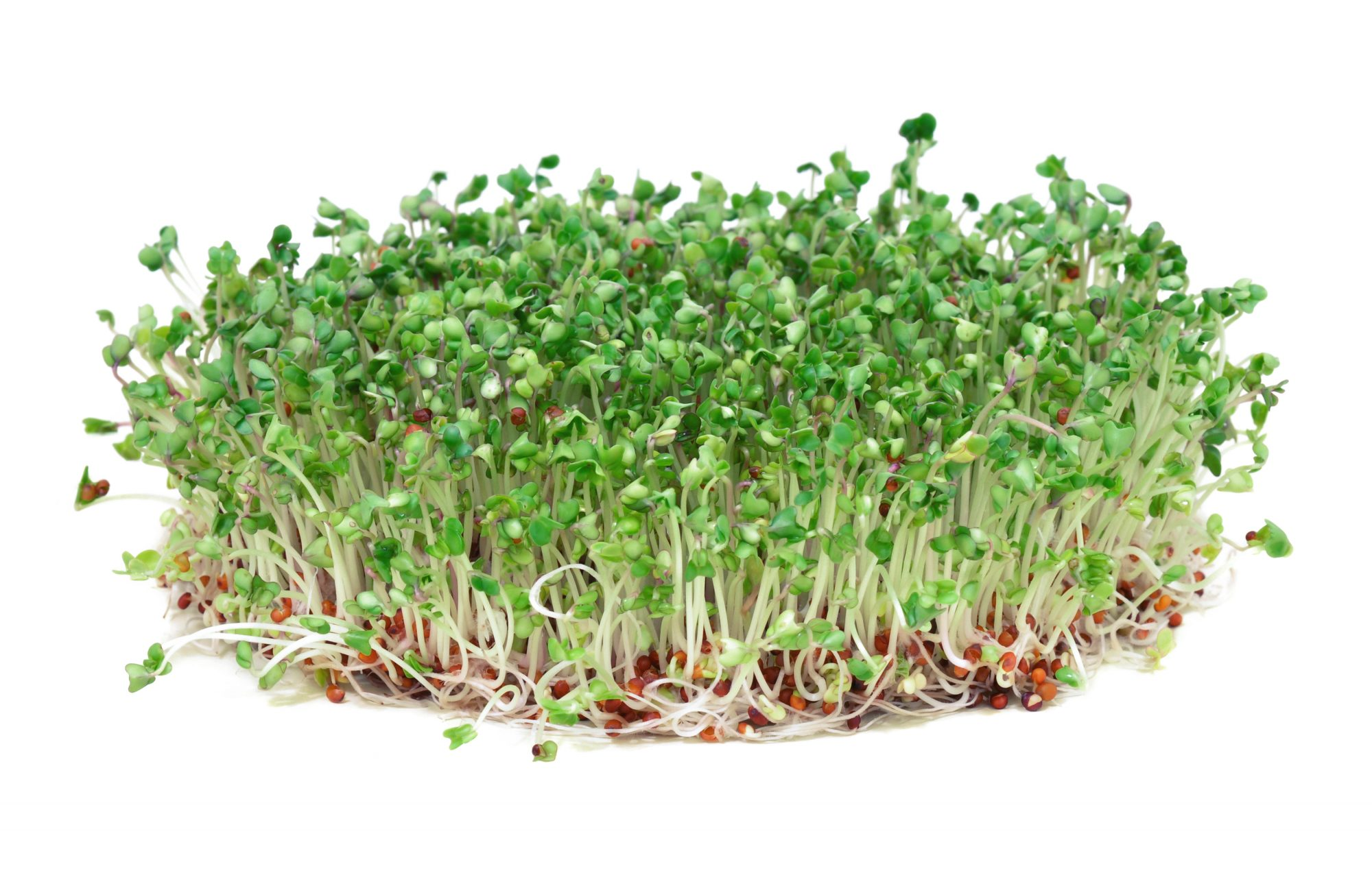 getty-broccoli-sprouts-image