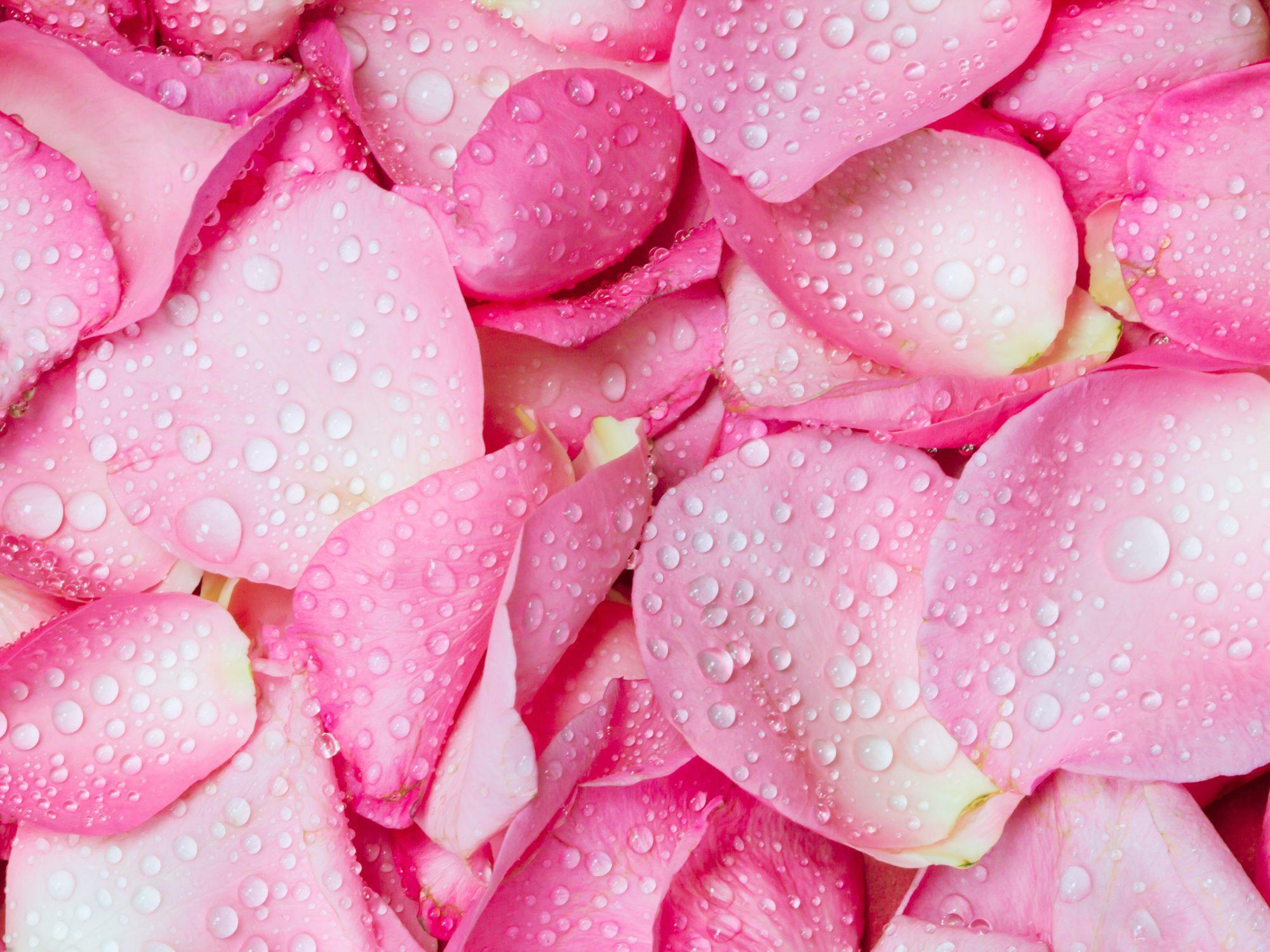 getty-pink-petal-image
