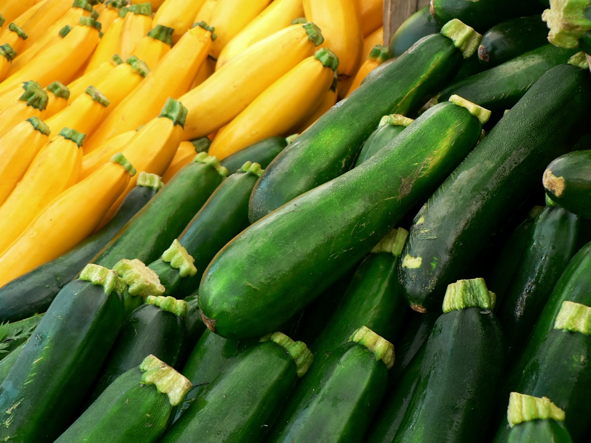 getty-summer-squash-image