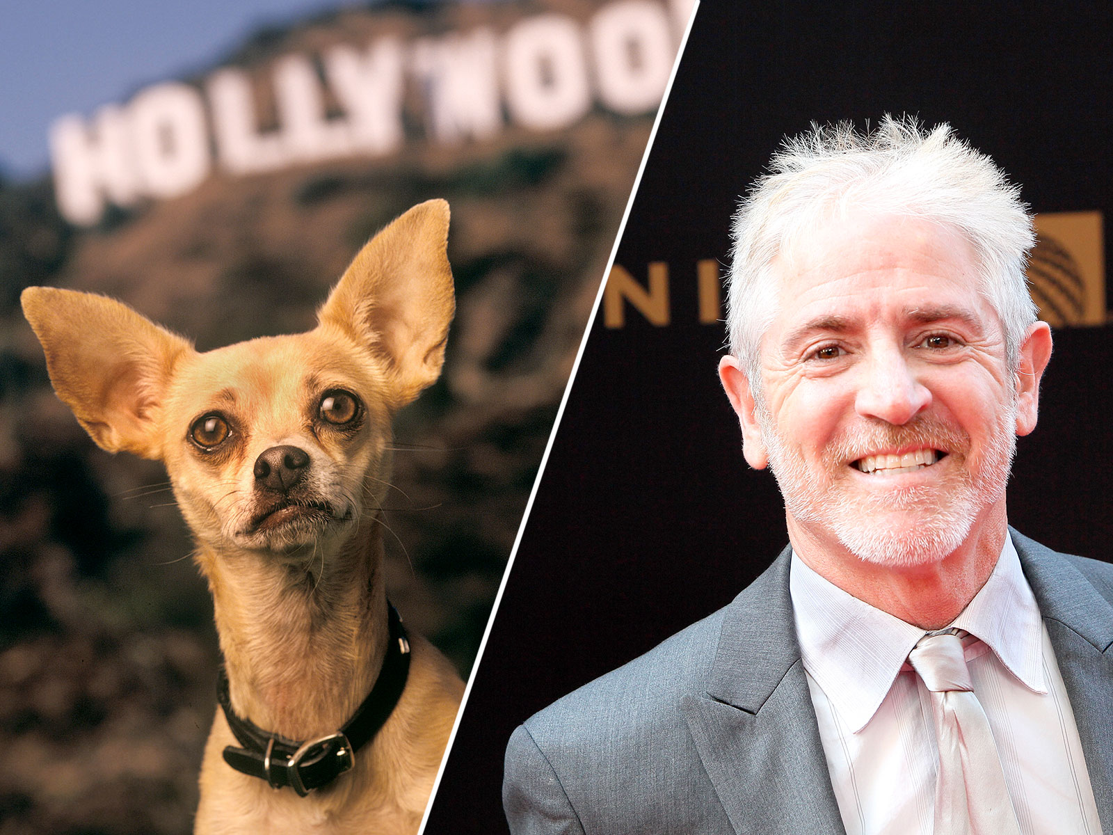 "Taco Bell Chihuahua Voice Actor Says It Was the Best Job ""I Ever Had"""