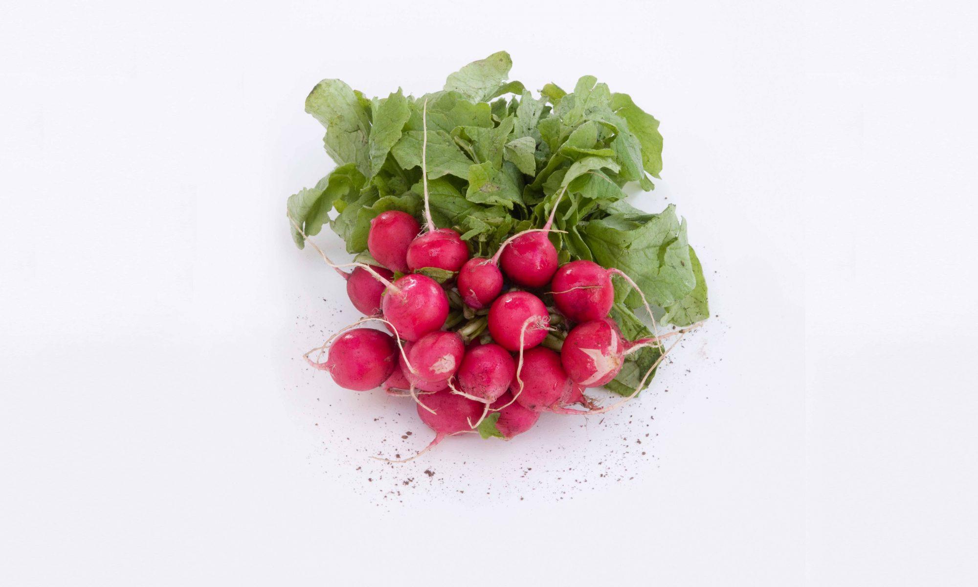 bunch of radishes on white background