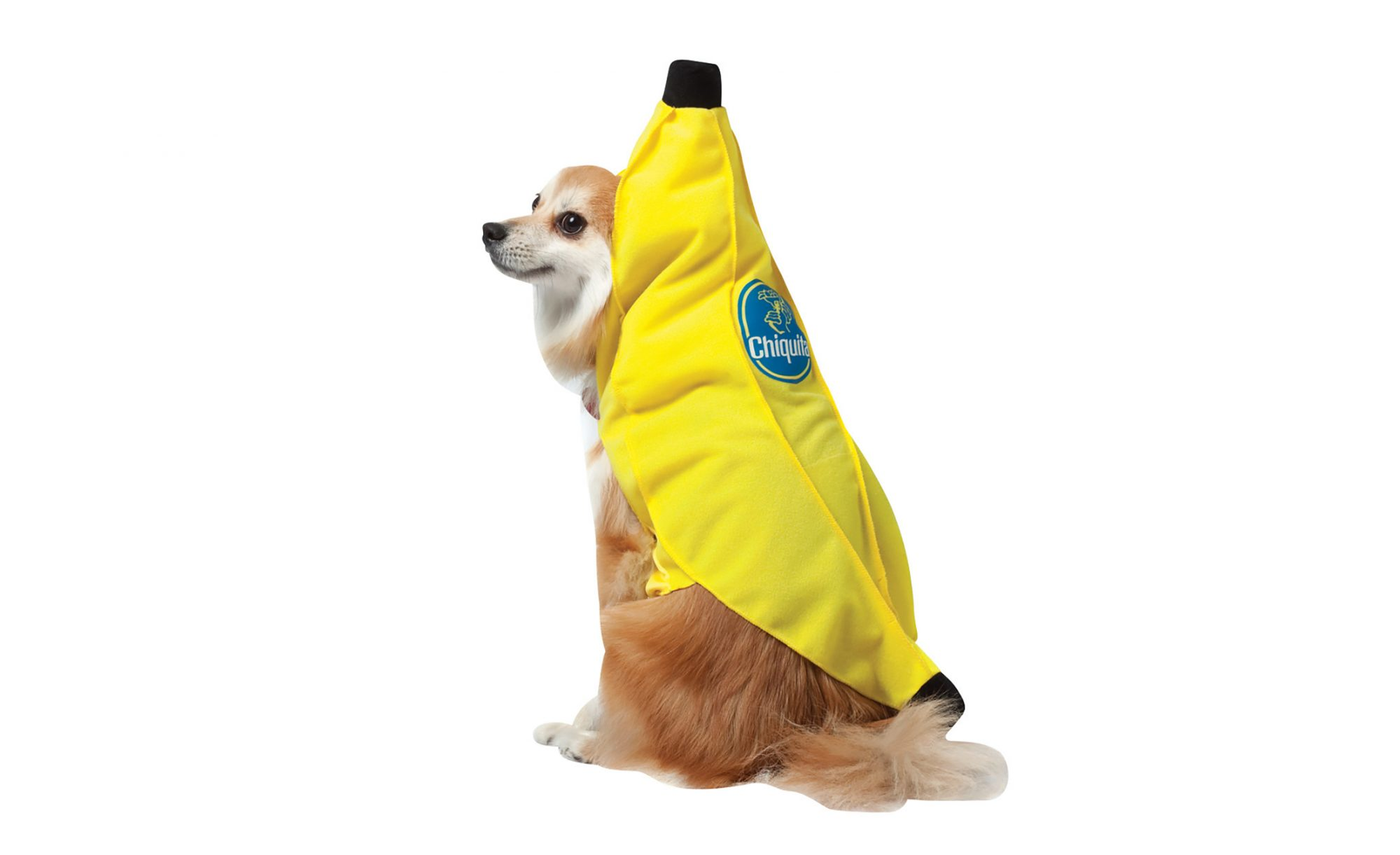1709w-Chiquita-Dog-Costume.jpg
