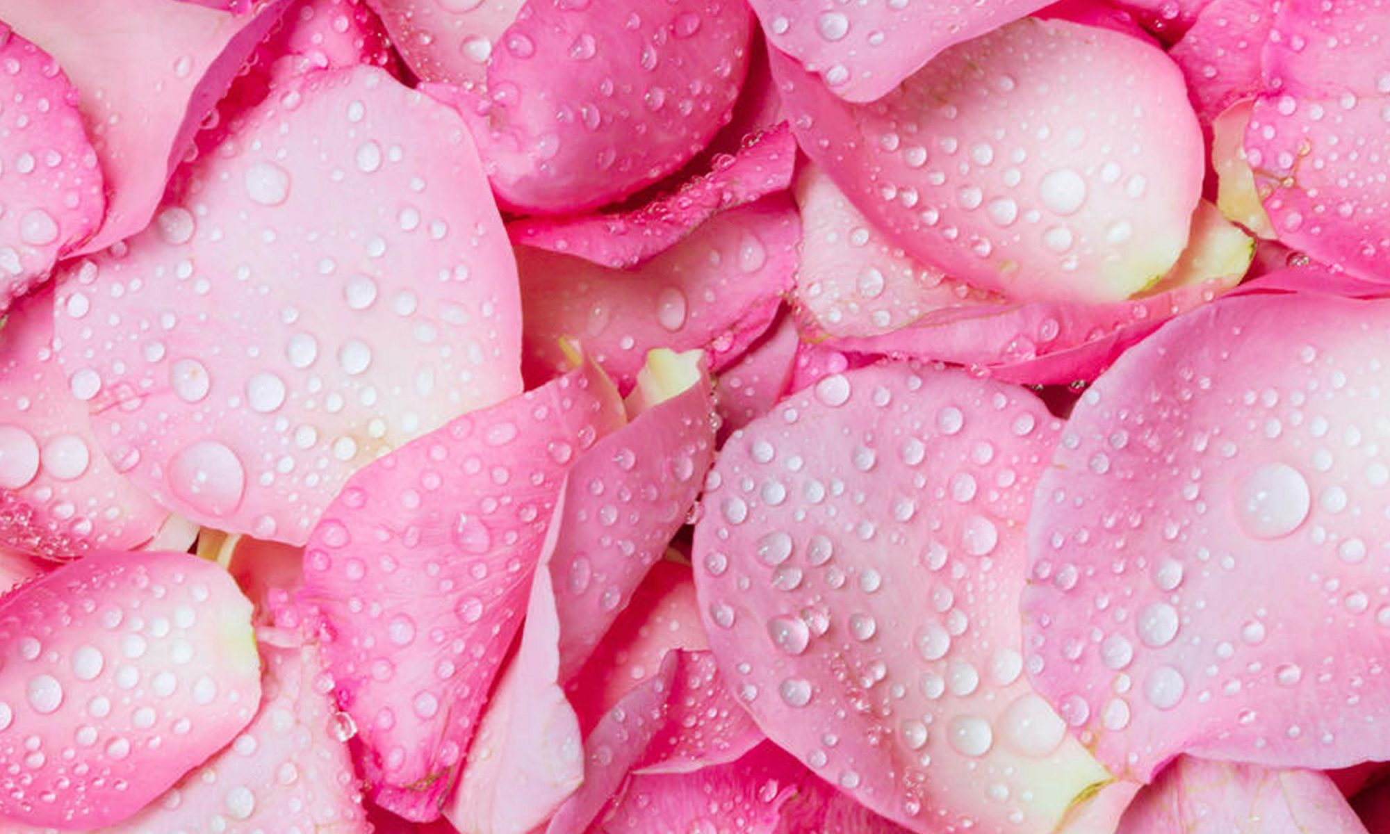EC: How to Cook with Rose Water