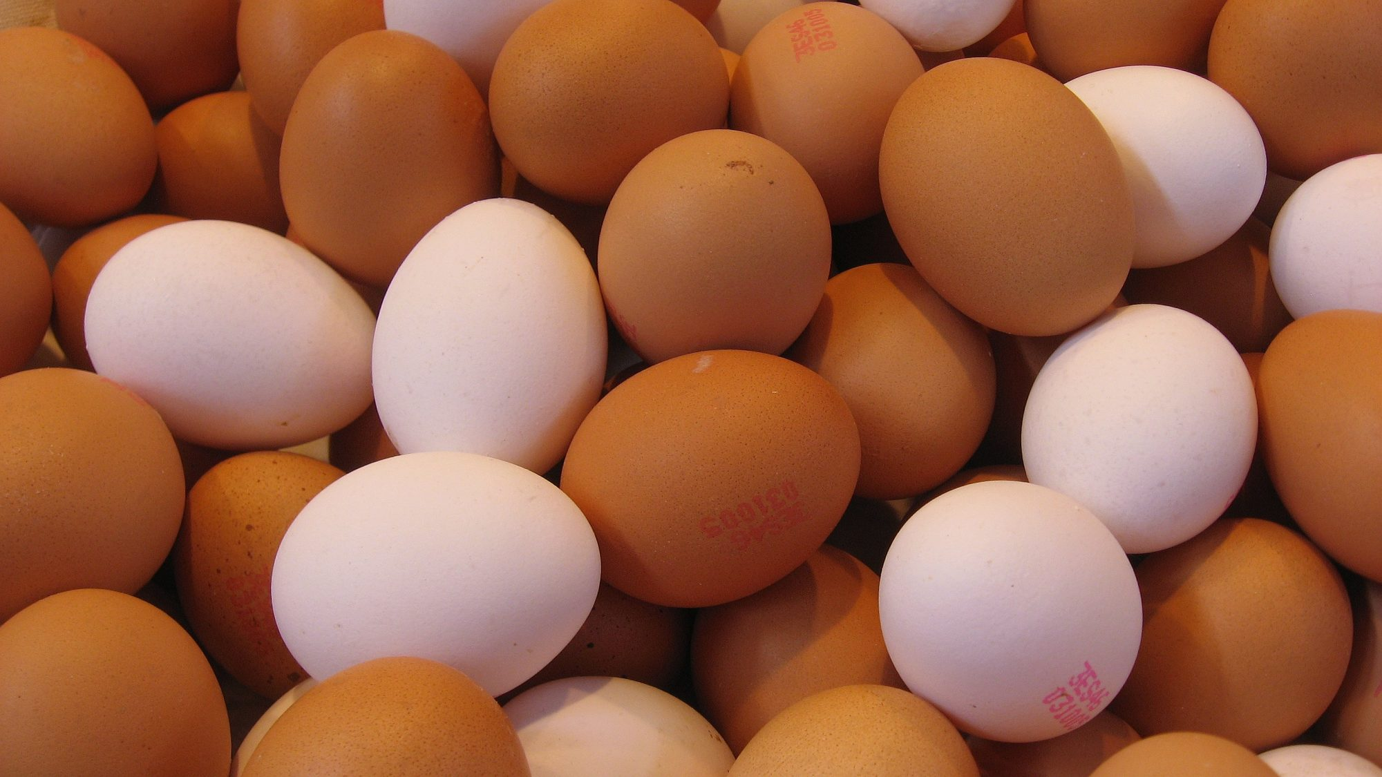 EC: Why Are Eggshells So Strong?