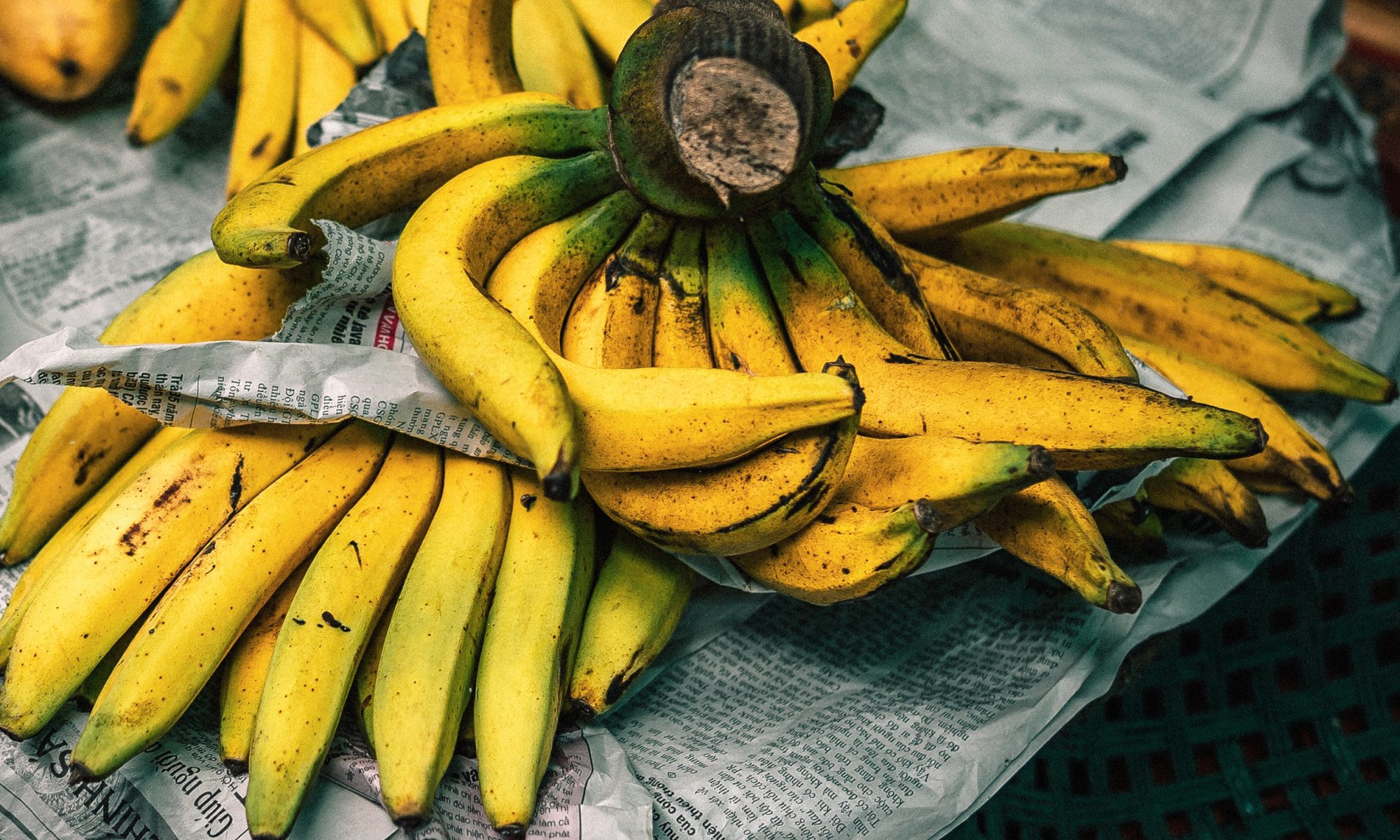 EC: Banana Extinction Could Be Prevented with Genetically Modified Plants