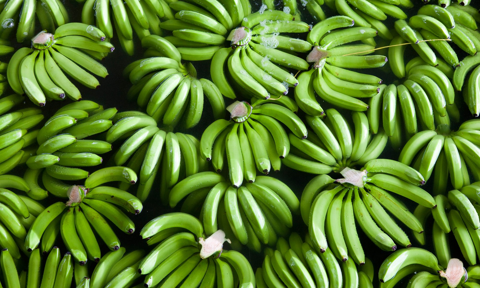 EC: What Is Green Banana Flour?