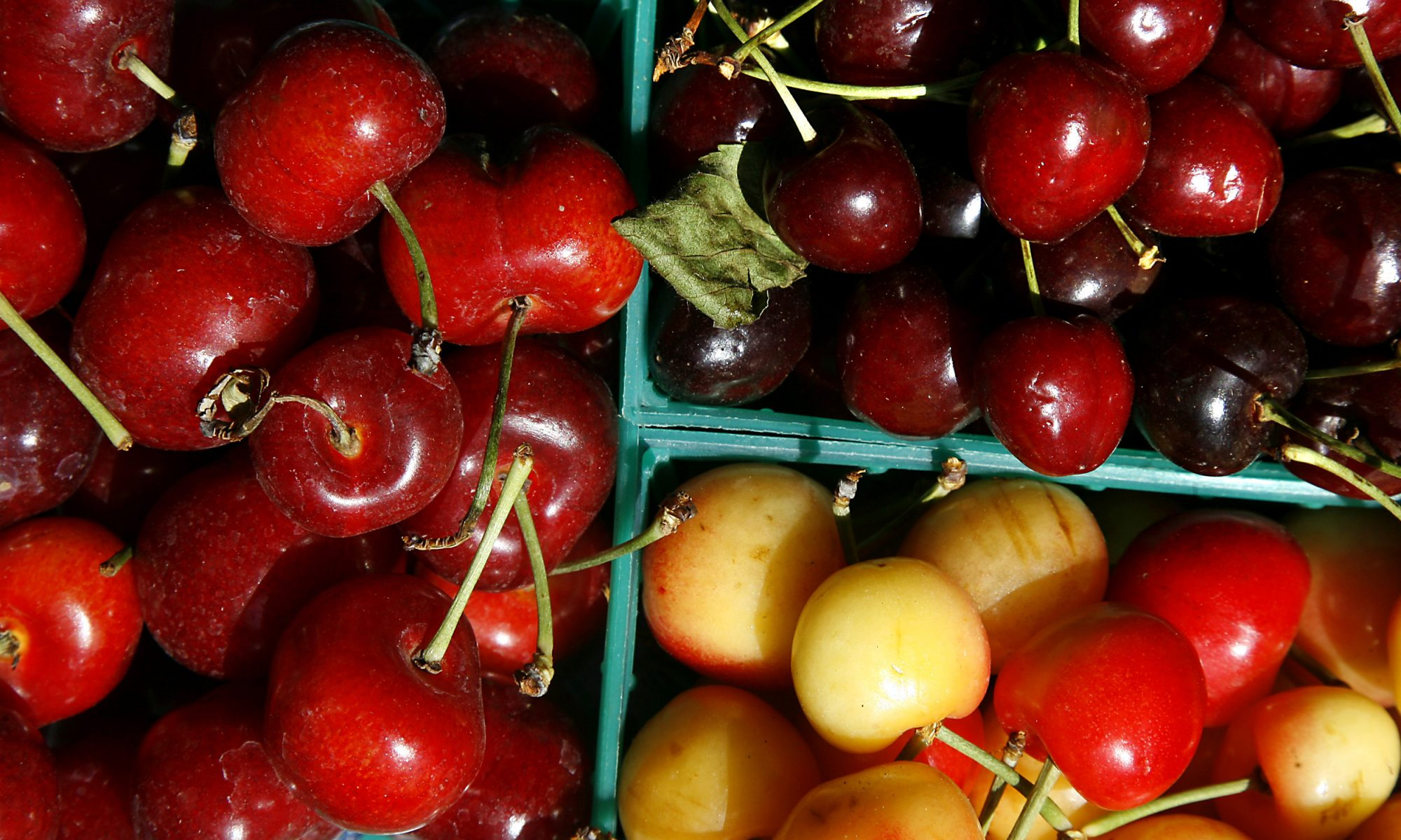 EC: These Are the Kinds of Cherries You'll See for Sale