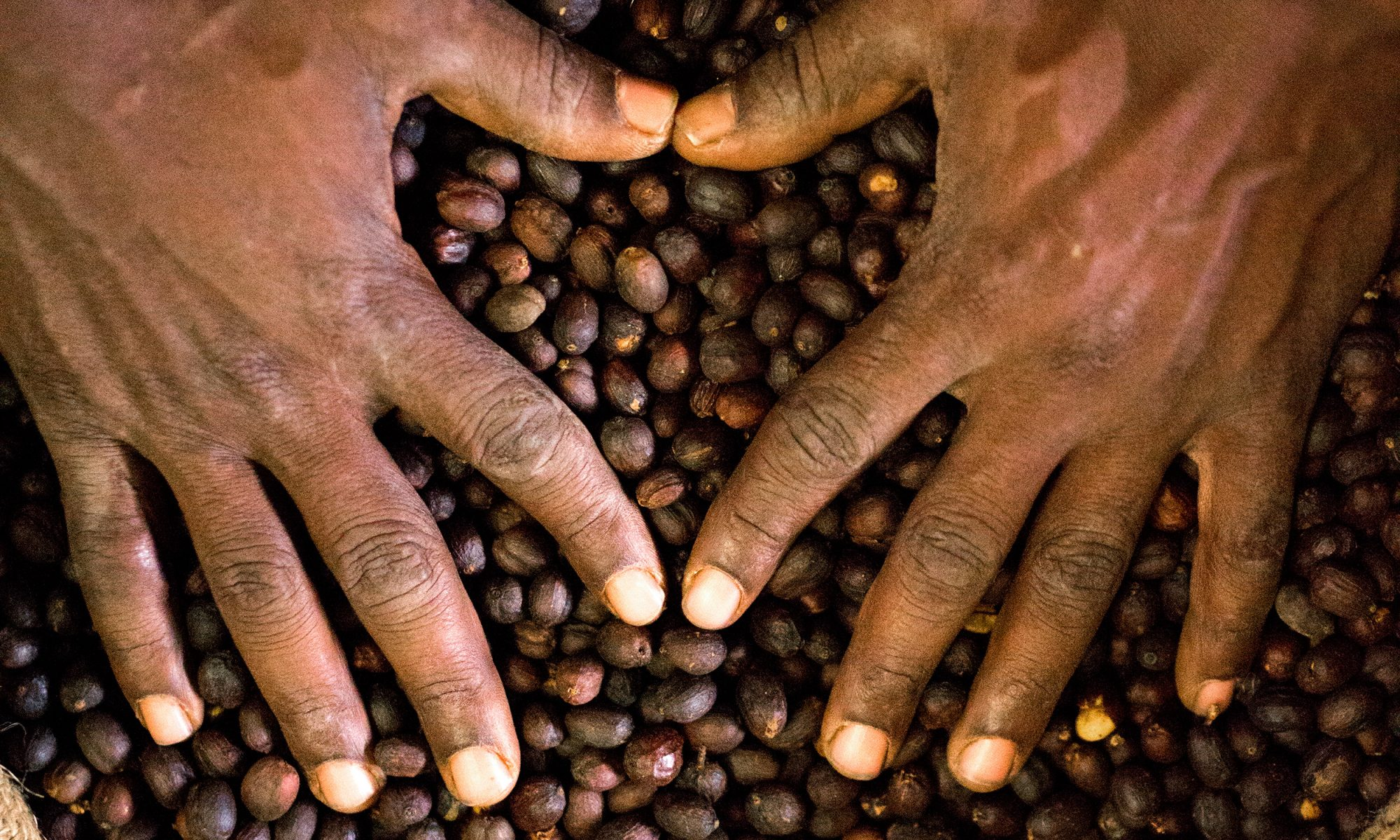 EC: Arabica Coffee Could Be Extinct in 70 Years Because of Climate Change