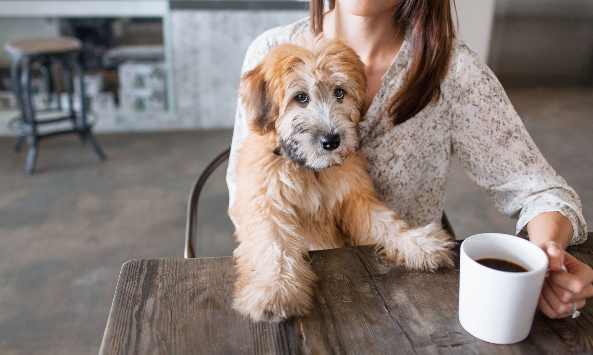 Buy This Coffee, Support Rescue Dogs