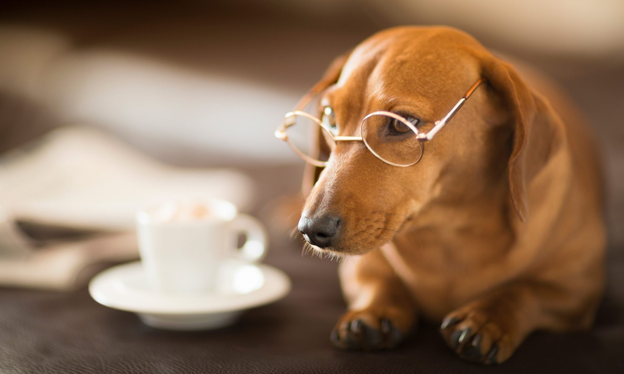 EC: Don't Poison Your Dog With Breakfast