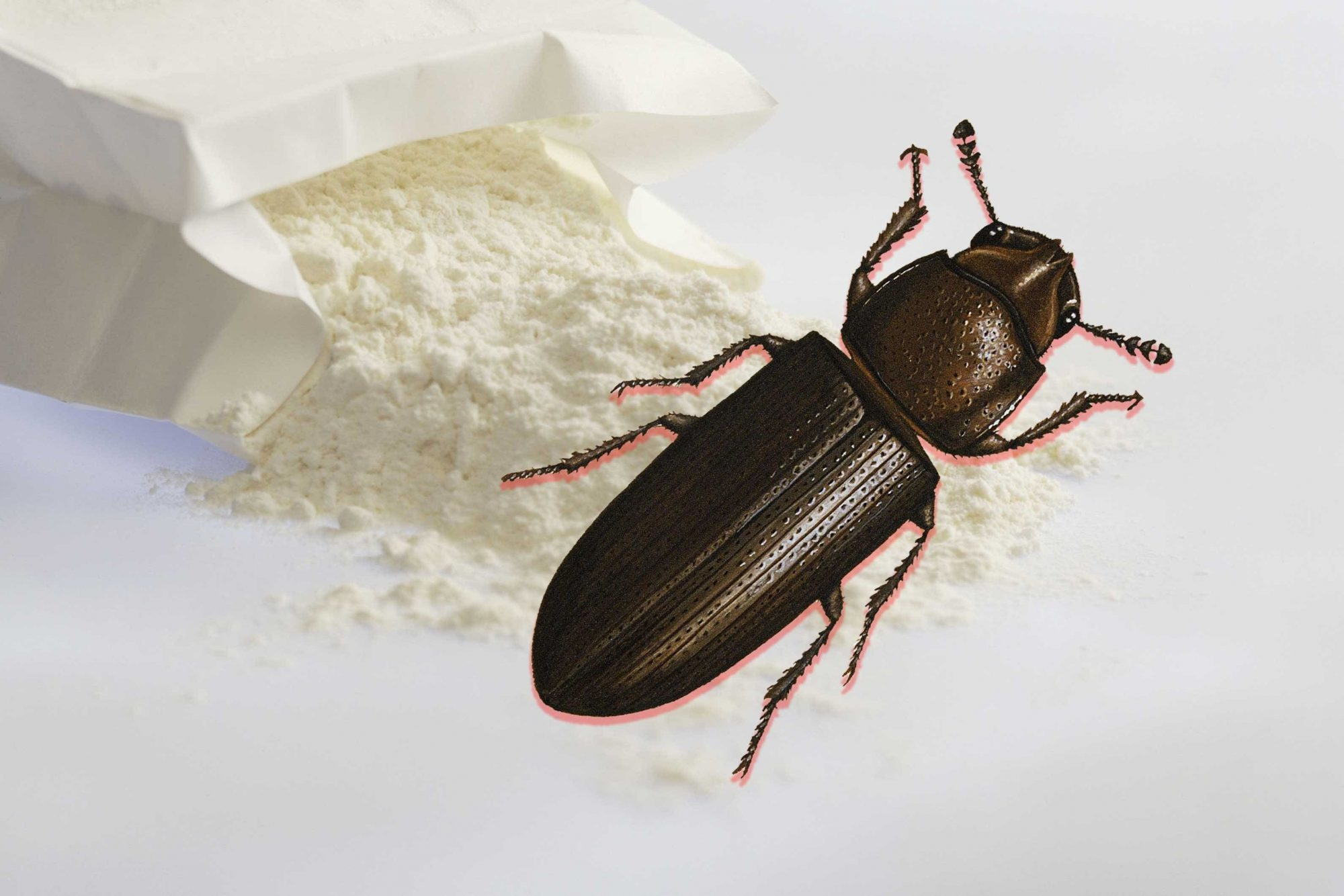 What Are Flour Bugs and Should I Be Worried About Accidentally ...