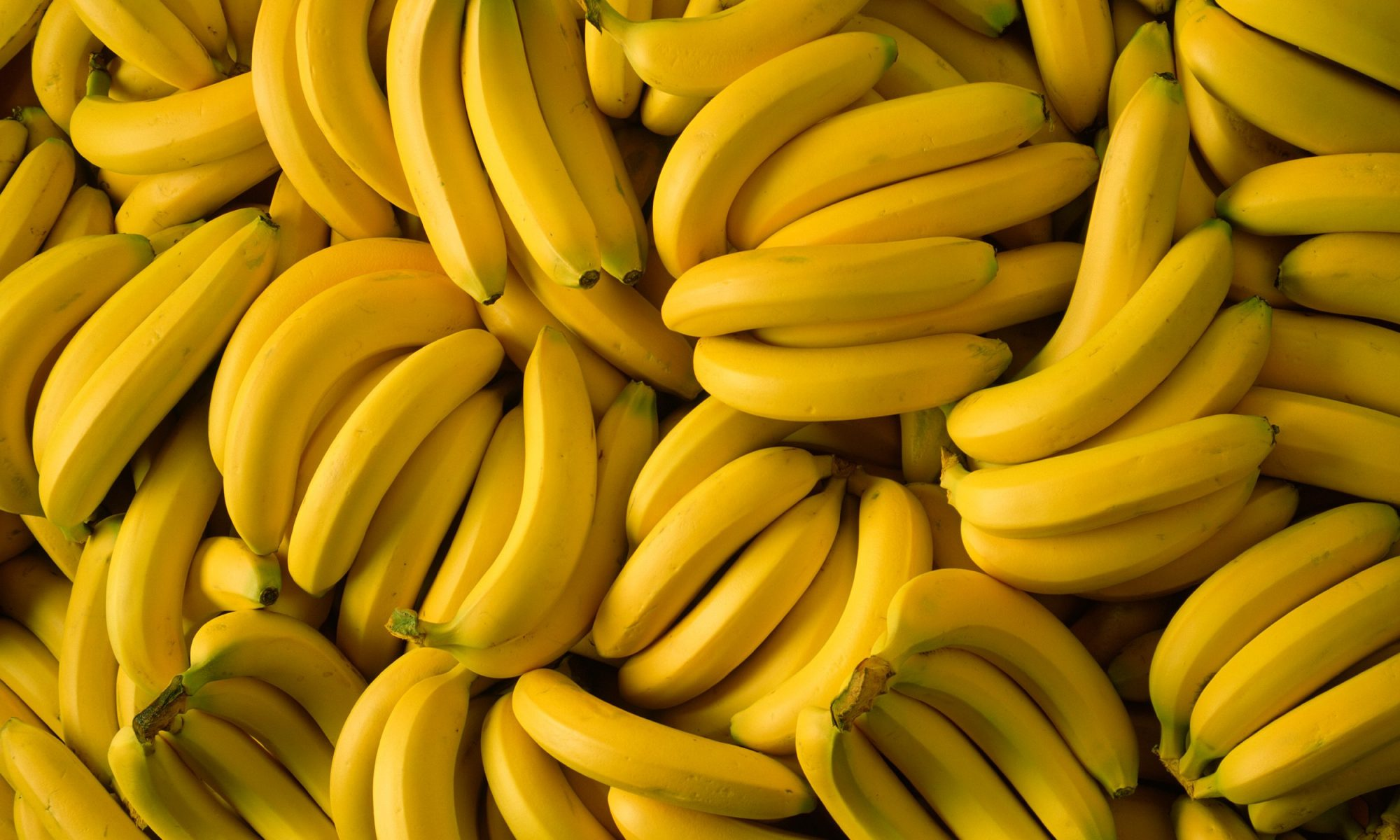 EC: Super-Food Bananas Could Help Thousands of Children Worldwide