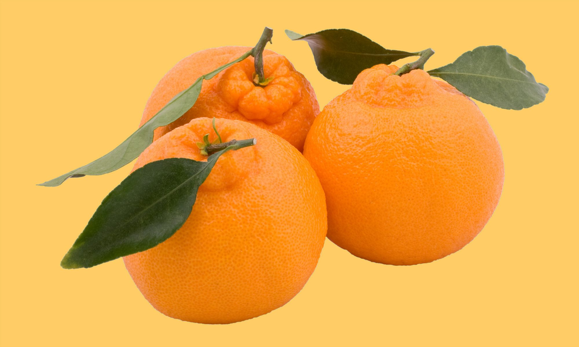 EC: This Is the Best Citrus You'll Ever Eat