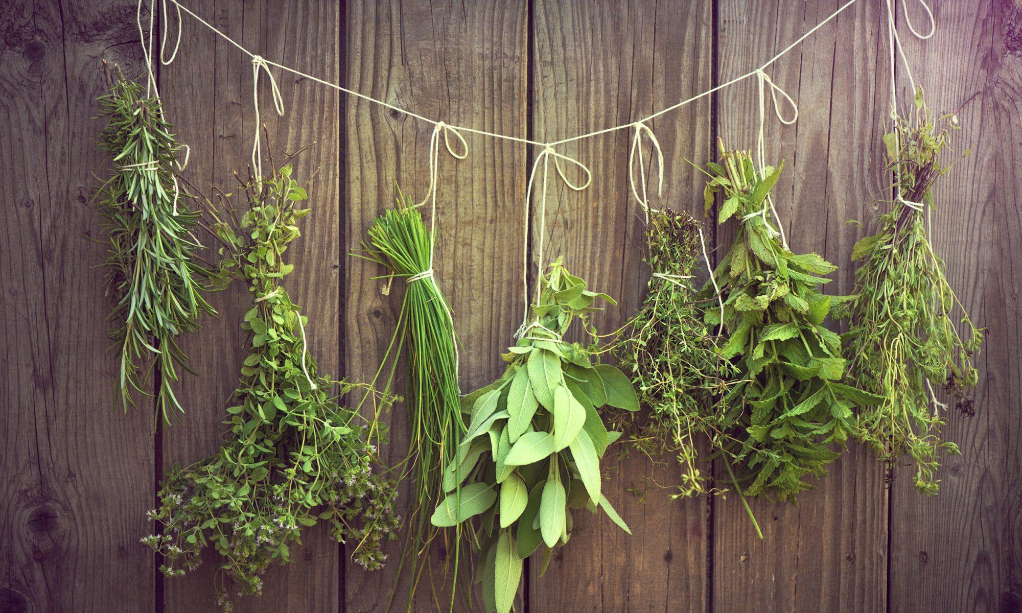herb bundles on strings