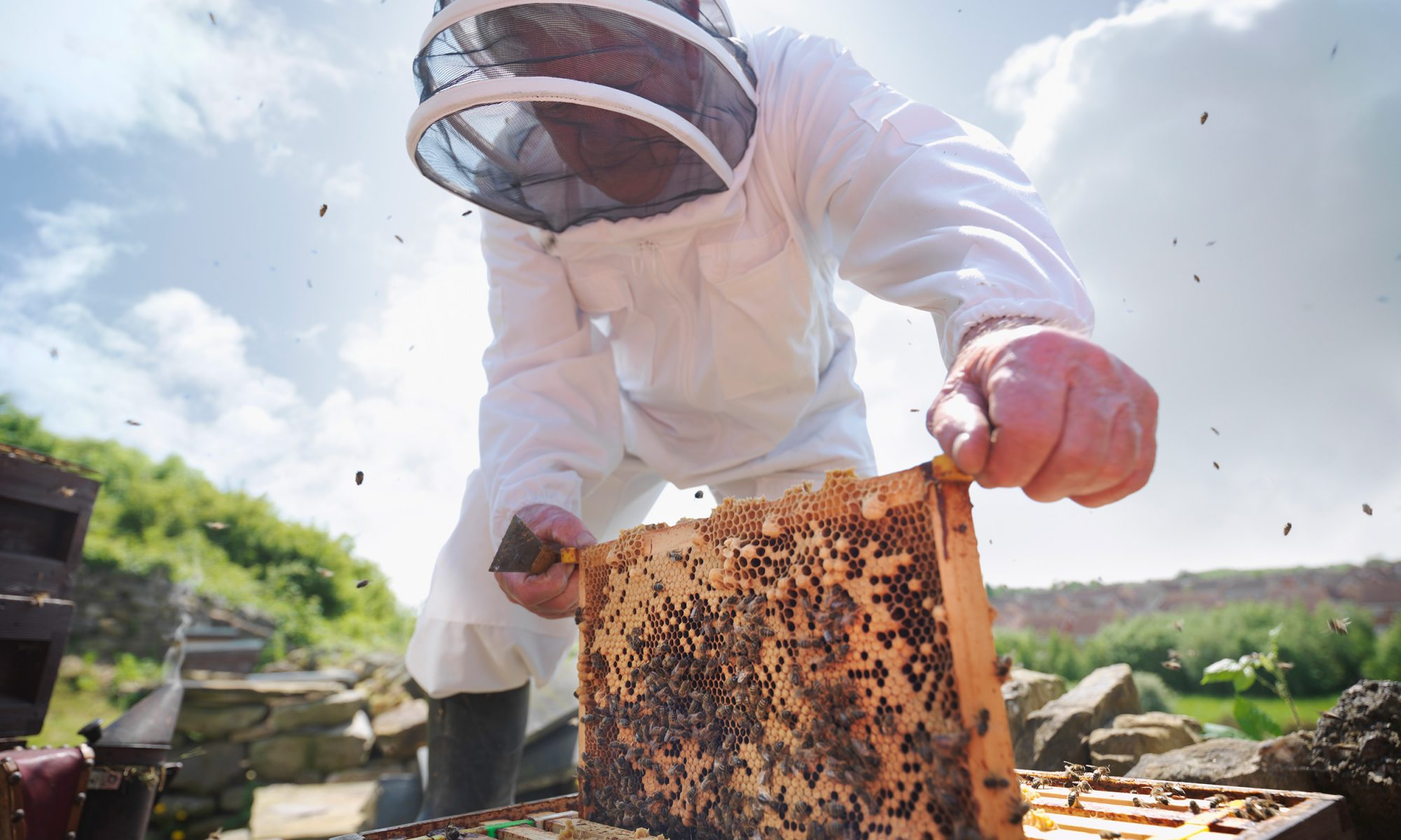 EC: Thief Who Stole Beehives Worth $1 Million Has Been Arrested