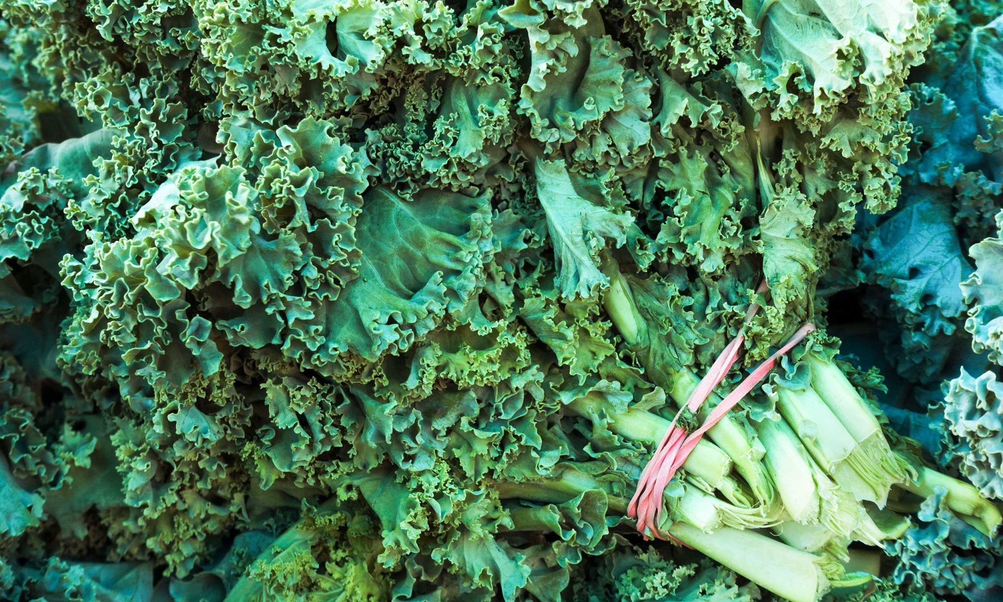 EC: How to Store Kale