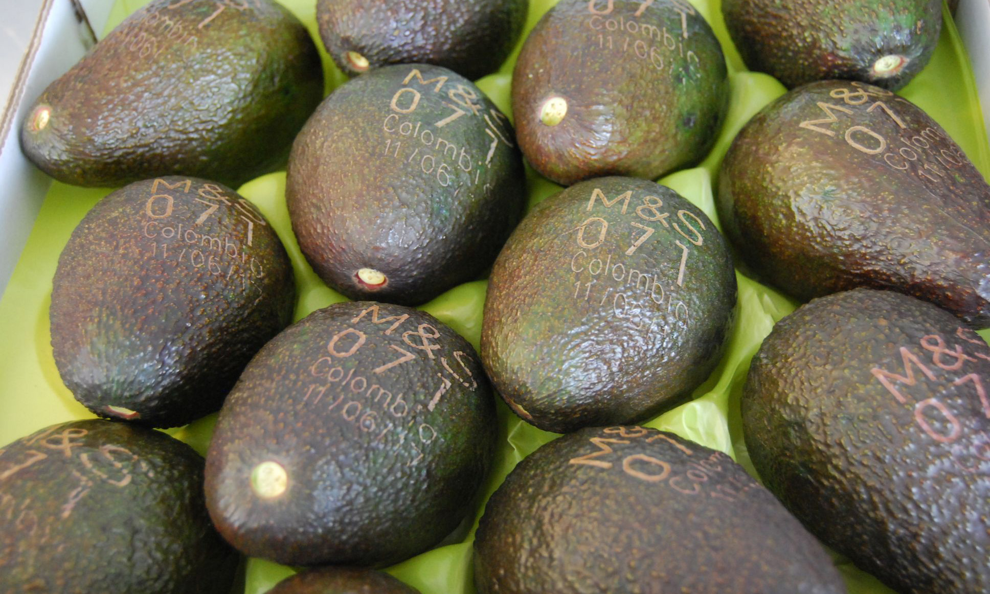 EC: Laser-Printed Avocado Labels Will Reduce Waste One Sticker at a Time
