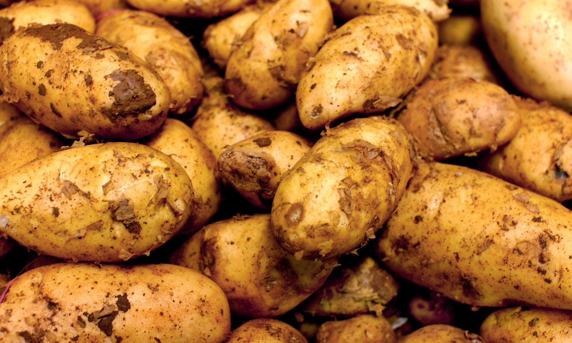 EC: We Can Grow Potatoes on Mars Now, Apparently
