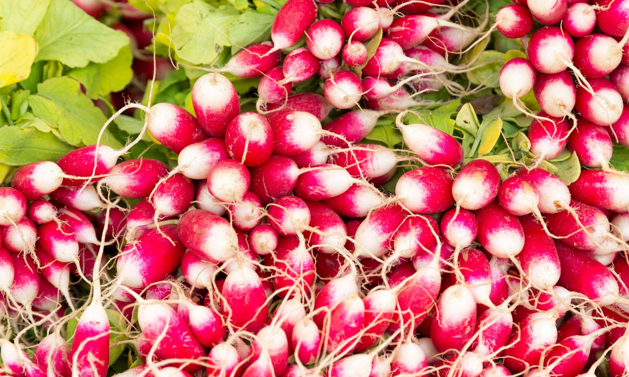 EC: Here's the Difference Between Radishes and Breakfast Radishes