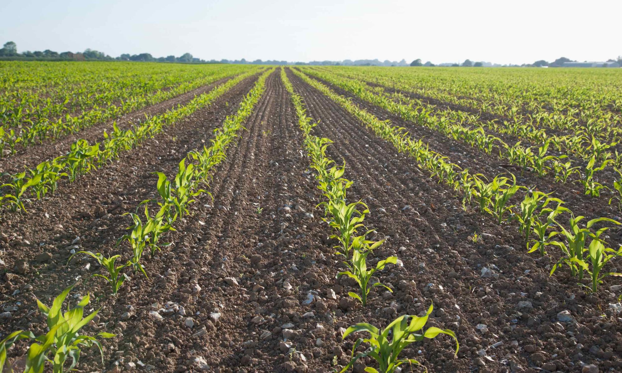 scientists may create self-fertilizing crops