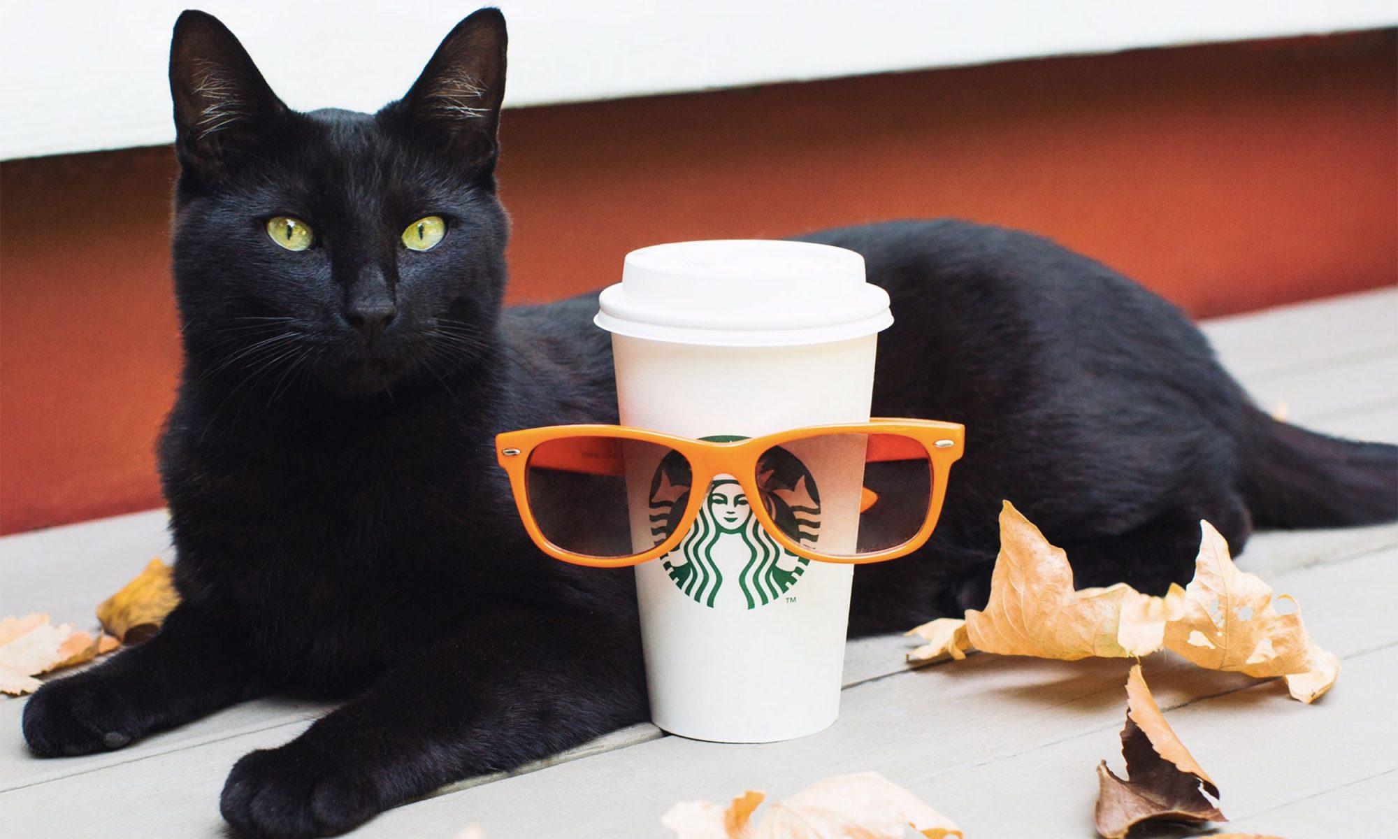 EC: Watch Starbucks Pumpkin Spice Latte Hatch on Facebook Live