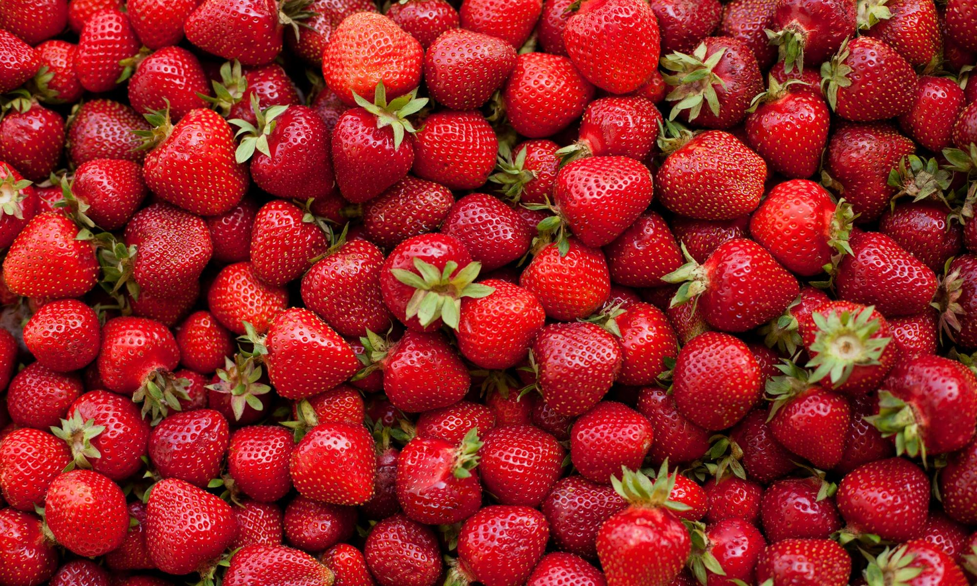 The useful strawberries Calorie. Contraindications. Strawberries with sugar 25