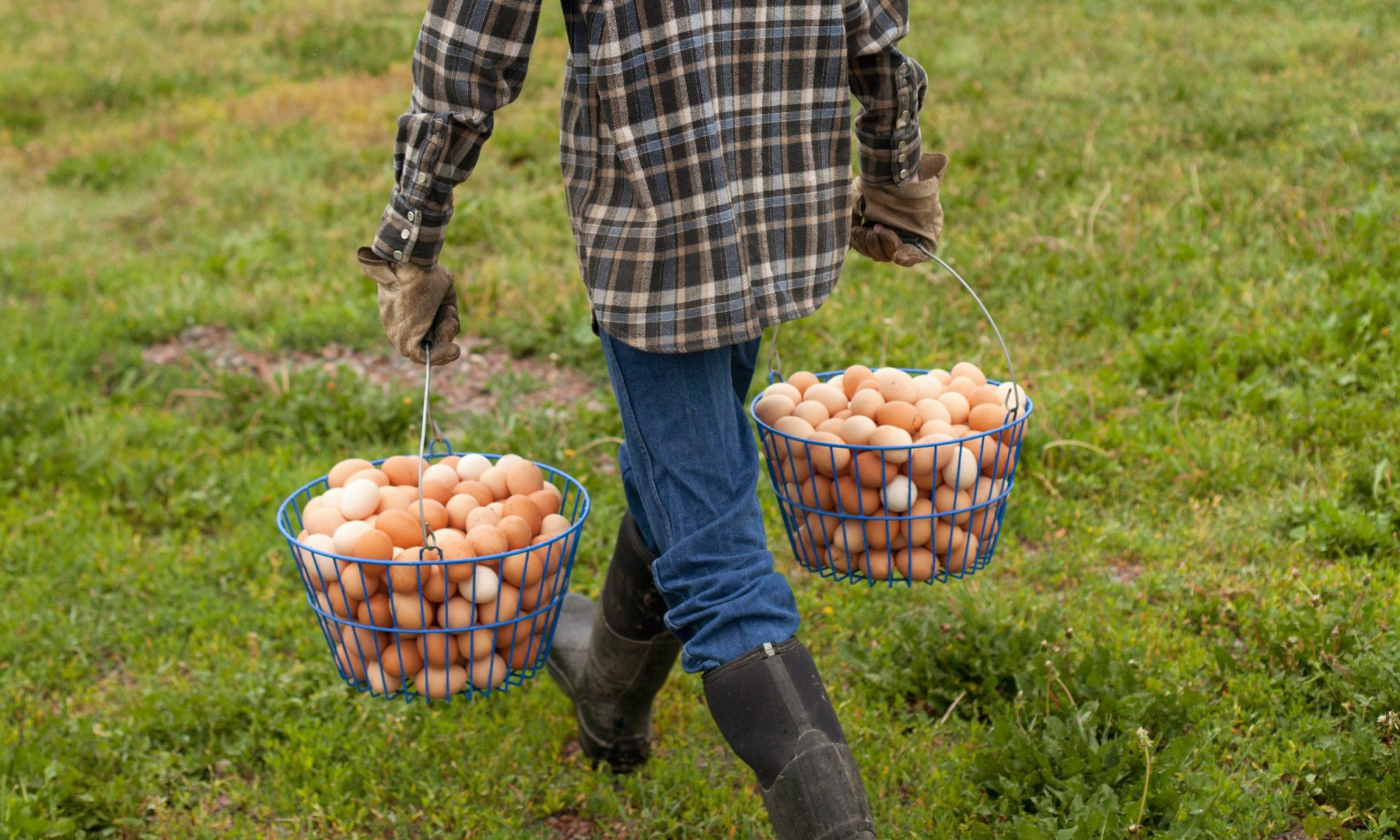 EC: This 8-Year-Old Kid Is Getting Rich Selling Eggs