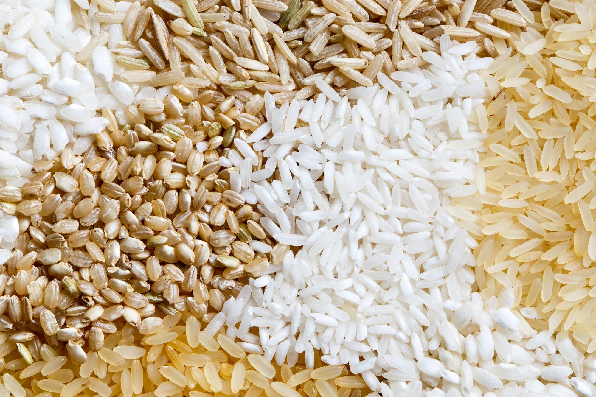 Short and Long Grain Rice